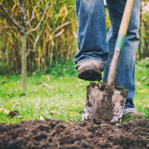 Soils & Blends